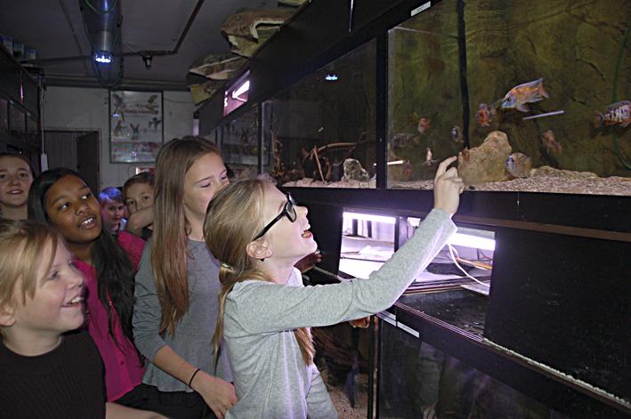 Fiskarna blir en del i undervisningen