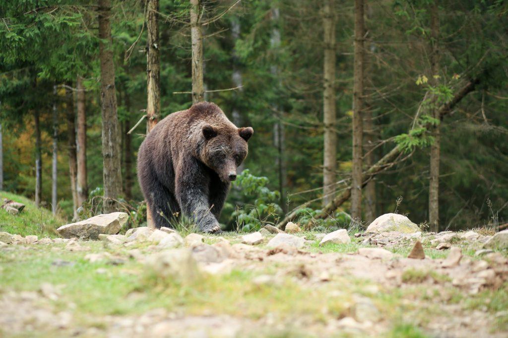 """""""Det var absolut en björn jag såg"""""""