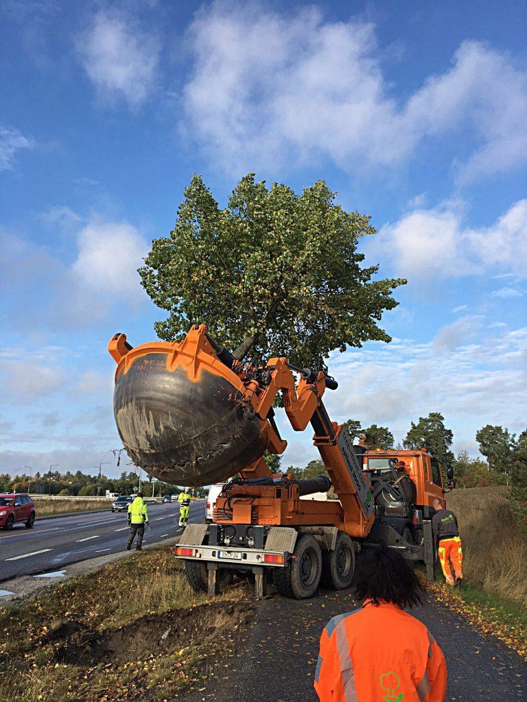 Nytt liv för gamla träd