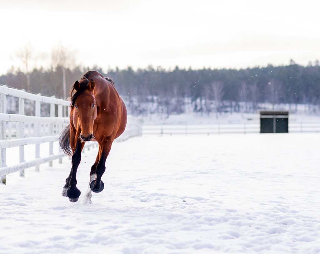Störst i Sverige på travhästar