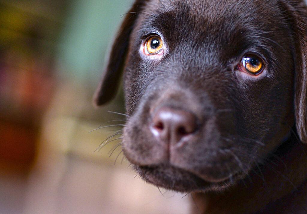 Många nya hundar under året